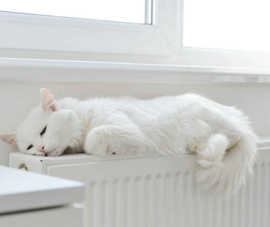 White cat sat on a convector radiator