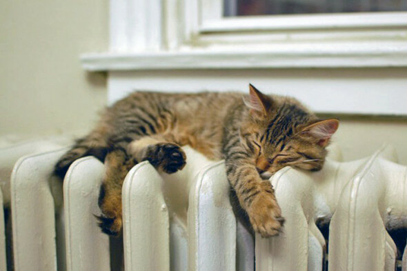 Comfy cat on a radiator