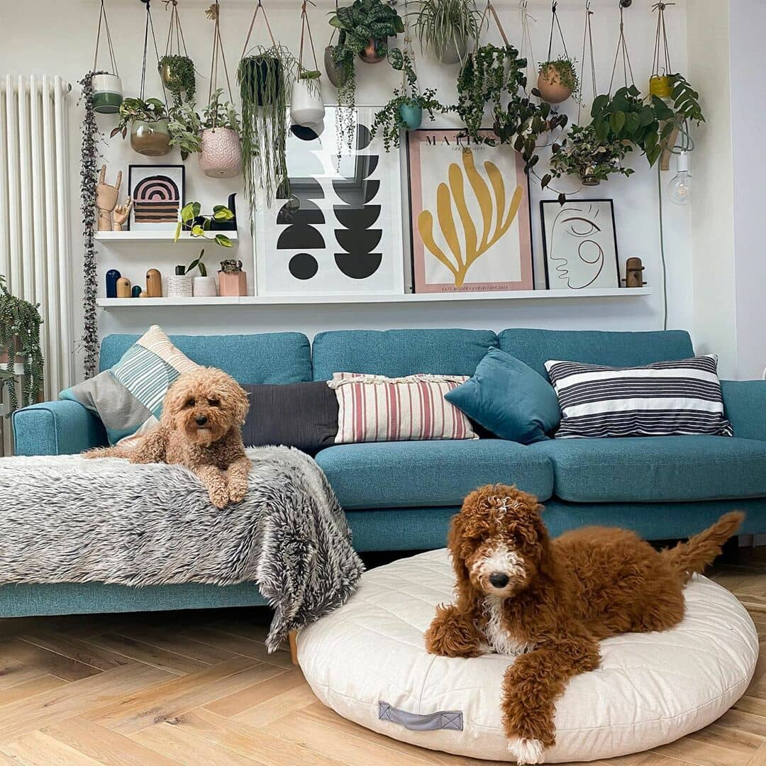 white vertical radiator next to a blue sofa with 2 dogs