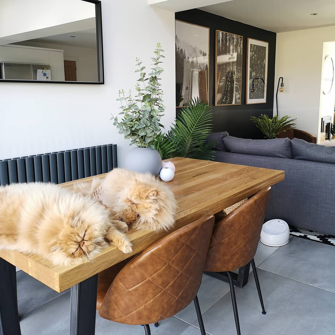 two persian cats on a dining table next to an Aruba radiator