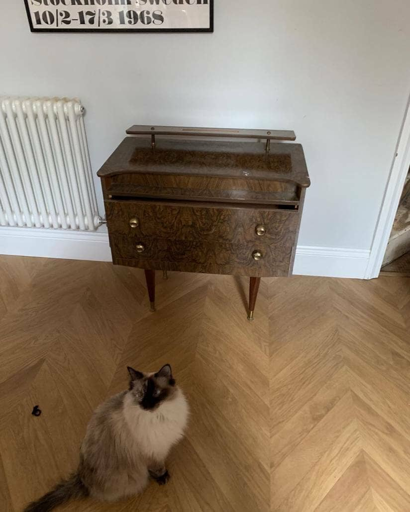 cat next to an old vintage dressing table