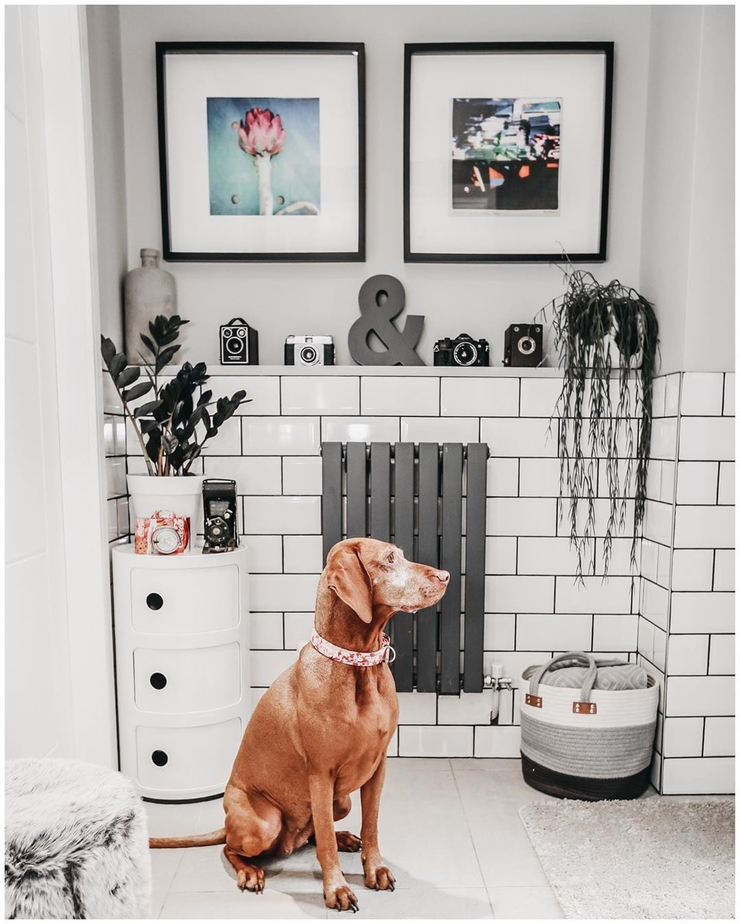 dog sat next to a small Milano Capri radiator