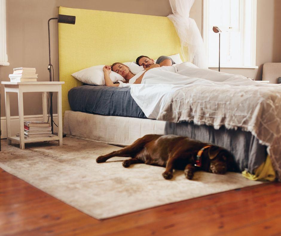 sleeping couple and dog