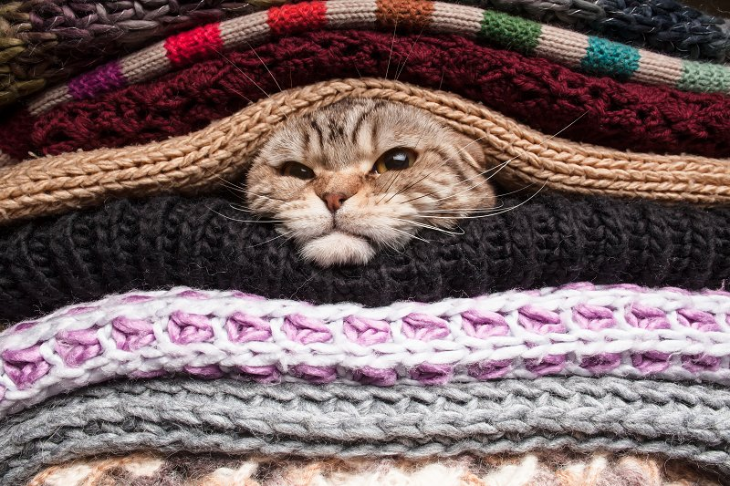 cat buried in a load of sweaters
