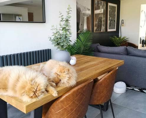 two cats on a table in a dining room seating area