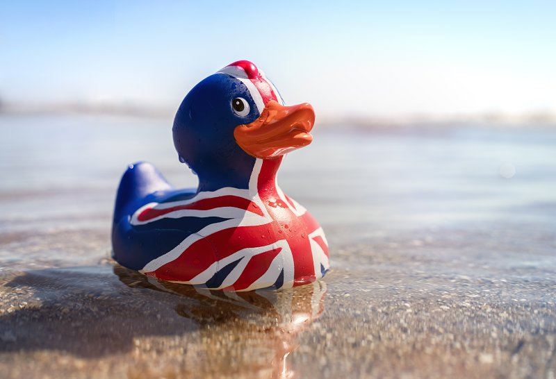 Brexit Duck on the shore